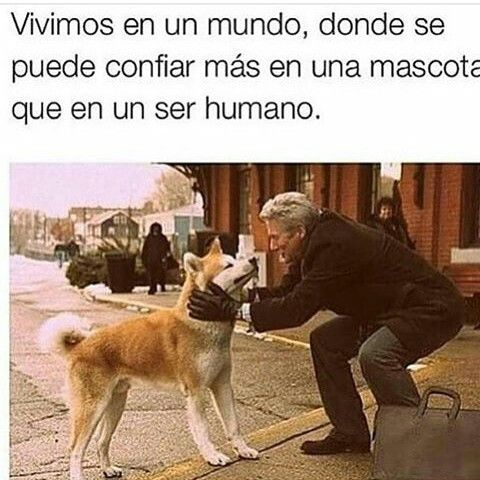 Entre más conosco a los humanos... Más quiero a mi perro/gato❤
