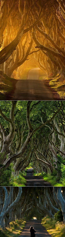 Ireland's Mysterious Tree Tunnel