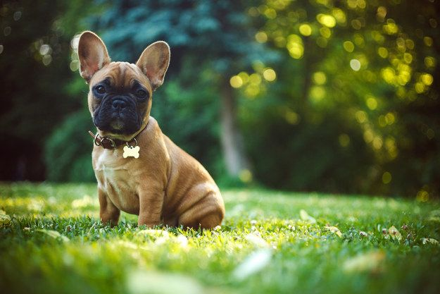 Build A House And We Ll Reveal What Kind Of Puppy You Need Dog Breeds French Bulldog French Bulldog Puppies