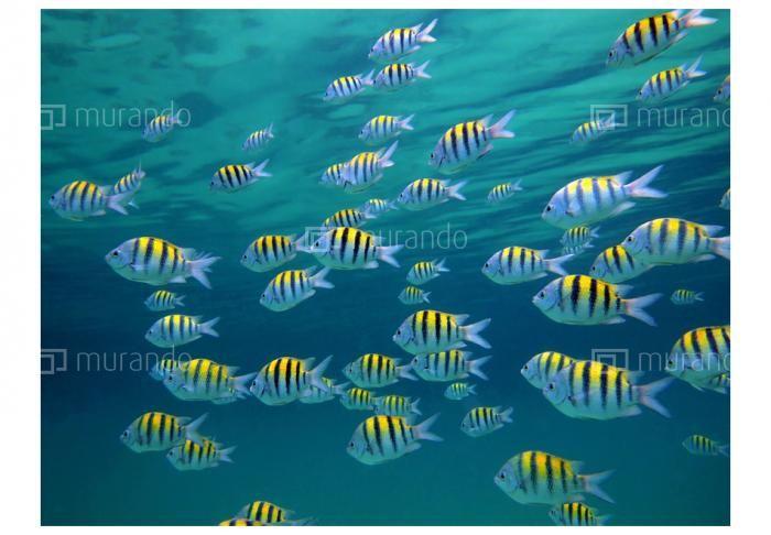 Rybky v oceánu