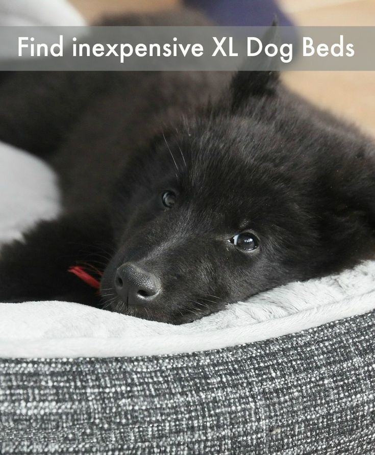 Check out our tips on where to find the best cheap extra large dog beds so your pooch can relax in comfort and style!