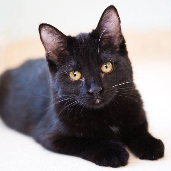 Nursery Decor Photo Cute Black Kitten Shelter by FelinesCanines
