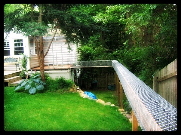 Best Catio Images On Pinterest Outdoor Cats Cats And Outdoor