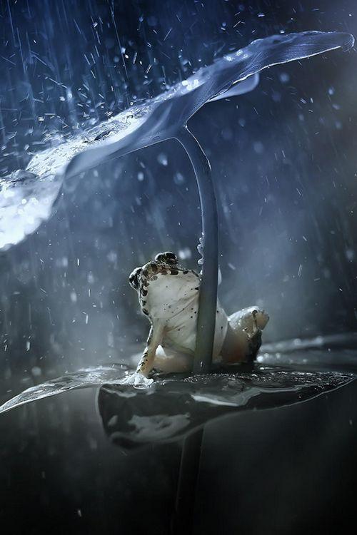 Rain ~ By Muhammad Mochta - via sinisa majetic's photo on Google+