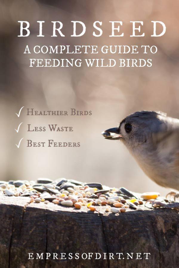 1e9c1b7744969512ae4e21a38cfb1c31 - How To Get Rid Of Birds In Your Trees