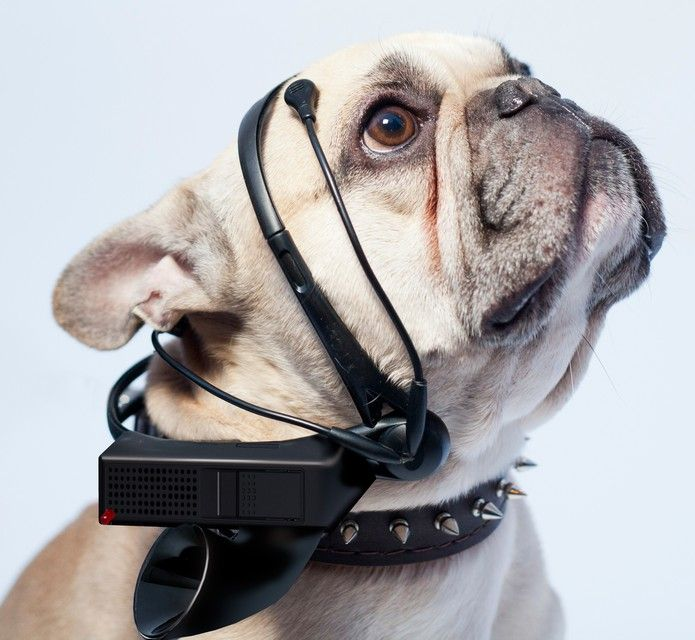 """Dog translation: A group of scientists has invented an electronic device that promises to analyze dogs """"brain waves"""" and translate a few of their thoughts"""