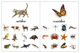 Montessori science -- sorting invertebrates and vertebrates