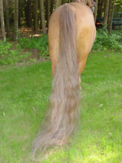How to Grow a Long, Lavish Horse Tail