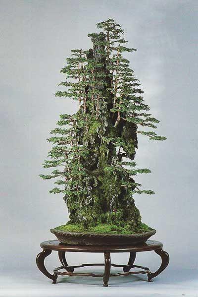 Árvores na rocha, de Masahiko Kimura. Ele demonstrou com as suas obras que o bonsai realmente pode ser arte.