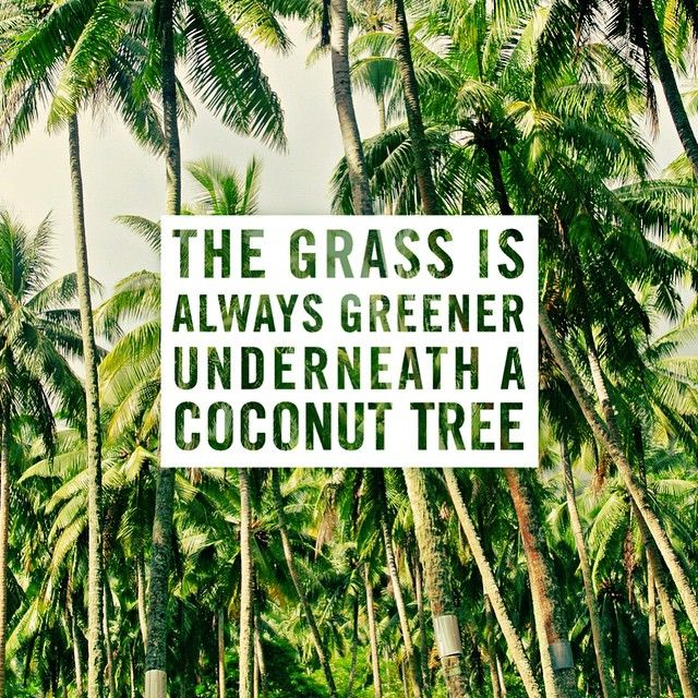 The grass is always greener...where you water it.  But, coconut trees are in tropical places where it rains a bunch, so the grass tends to be super green under them too.