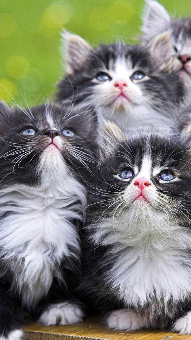 best gifs juben images on Pinterest Beautiful hearts Kawaii