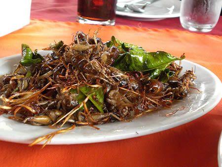 15 Strangest Foods - Oddee.com (strange foods, bizarre foods) cooked crickets