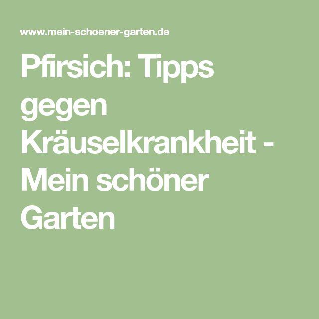 Pfirsich: Tipps gegen Kräuselkrankheit - Mein schöner Garten