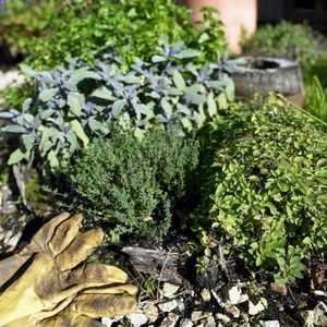 herbs that can be potted together -  dry soil - rosemary, oregano, marjoram  sage, bay, lavender, thyme  wet soil - coriander, cilantro, mint, parsley  basil, chives, dill, tarragon