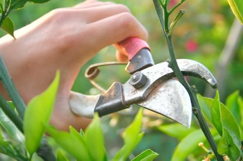 Idős gyümölcsfák megmentése.  Szinte lehetetlen olyan metszési tanácsot adni, amit minden hasonló fajtájú fára egyöntetűen alkalmazni lehetne.