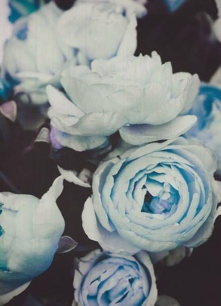 Pale blue, dark grey.