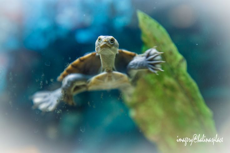 Photo by imagery@halinasplace won in category Under Water Life