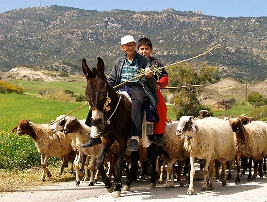 Rural Cyprus!