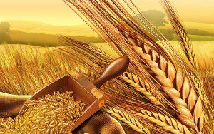 Εποπτικό υλικό: Κύκλος ψωμιού