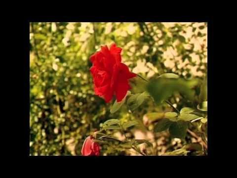 Erba Di Casa Mia. MASSIMO RANIERI - YouTube