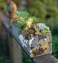 succulent planterGardens Ideas, Gardens Therapy, Container Gardens, Water Plants, Hearty Plants, Bricks Wall, Succulent Gardens, Planters Boxes, Succulent Planters
