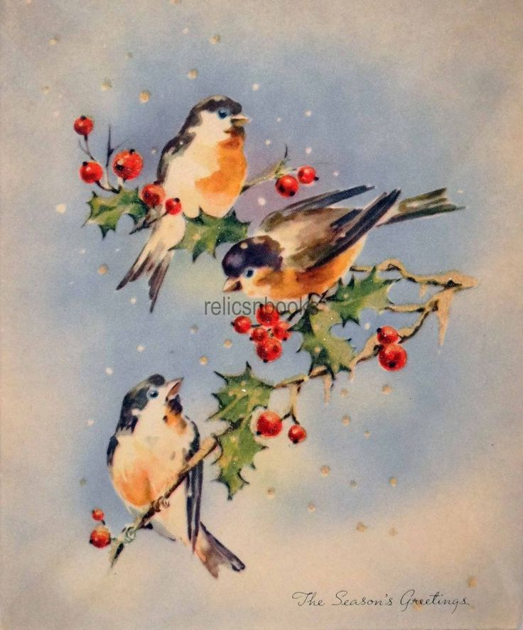 Birds On Christmas Tree: 78+ Images About Christmas: Bird Cards & Illustrations On