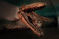 About Us | Canadian Fossil Discovery Centre
