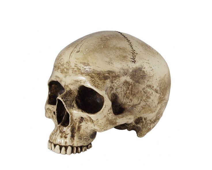 Skull replica / Shakespeare's Globe | Hamlet | Pinterest