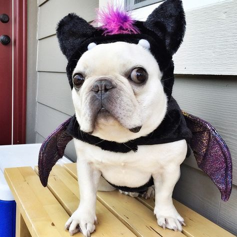 petsmart halloween costumes for dogs