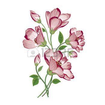 witte achtergrond tekening bloemen - photo #7
