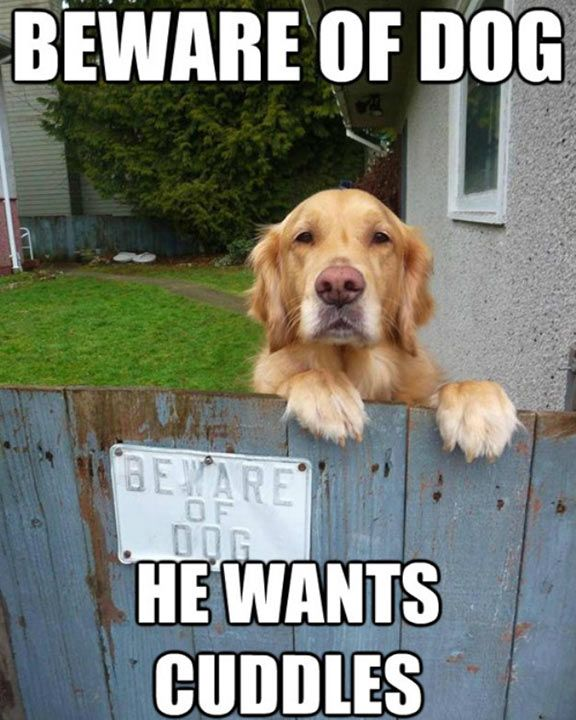 Top 70 Cute Funny Animal Pictures with Captions