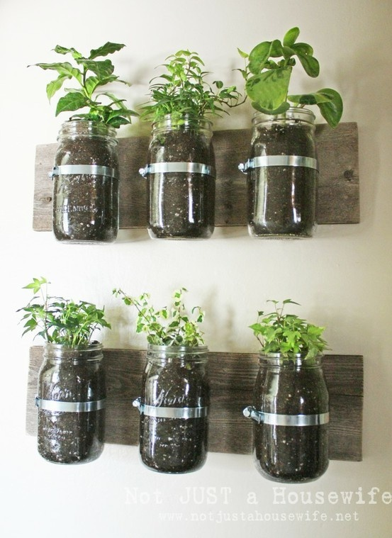 Mason Jar Wall Planter ~ bring the garden inside with this. I want to make some vertical ones to go inside the window frame.