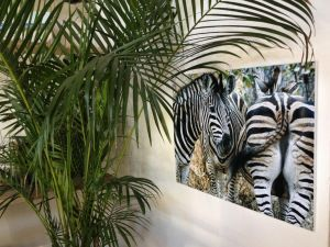 Zebra - Wildlife Photography by Clare FitzGerald