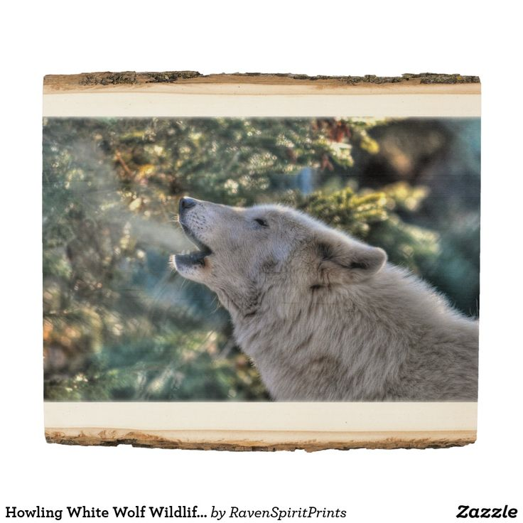 Howling White Wolf Wildlife-lovers Photo Image Wood Panel