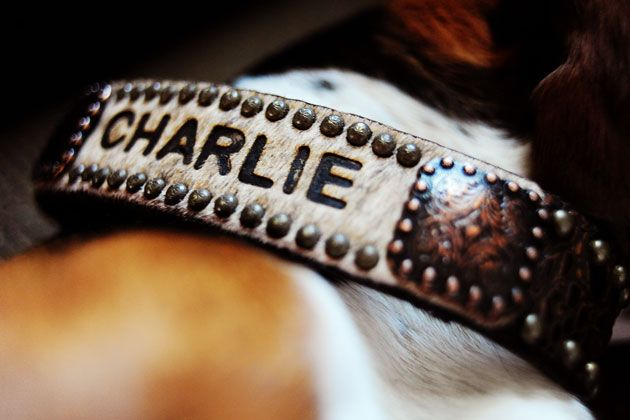 oh, I am so getting this for my JJ, cowhide dog collar. :)