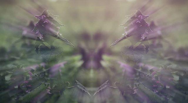 #day #photomanipulation #photography #abstract #abstractphotography  #naturephotography  #flowers #green #duality #photoediting #nikcollection #surrealism #canon1300d #canonphotography #tamronlens #tamron1750 #tamron #orastie #gbartok #surrealismphotography