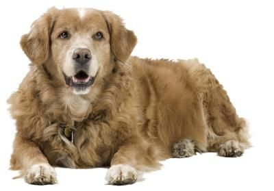 Cómo hacer un aerosol natural para combatir la comezón de tu perro | eHow en Español