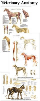 Veterinary anatomy posters