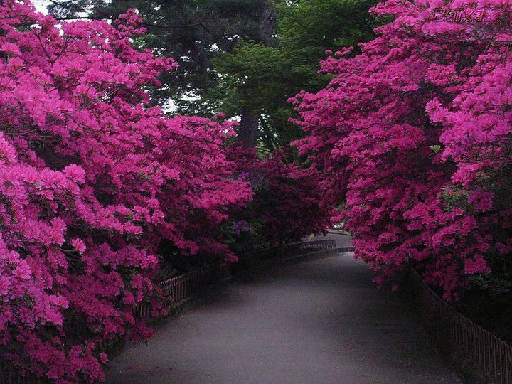 Flores Lilas Con Rosas Sobre Fondo: 126 Best Images About Ruth Fotos On Pinterest