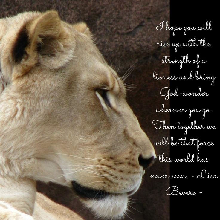 I hope you will rise up with the strength of a lioness and bring God-wonder wherever you go. Then together we will be that force this world has never seen. - Lisa Bevere -