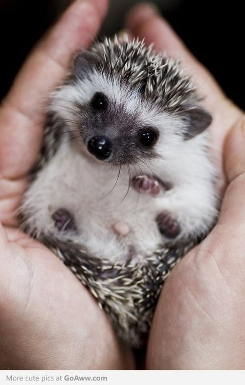cool wallets for men baby hedgehog  Creatures