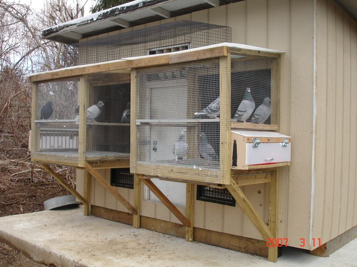 17 best images about pigeon lofts and bird cages on for Pigeon coop ideas