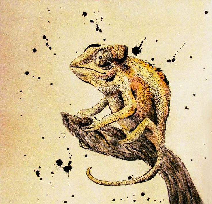 Картинки по запросу хамелеоны картины