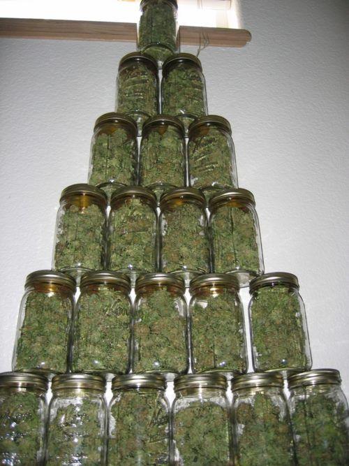 someday   ( marijuana cannabis )  Legalize It, Regulate It, Tax It!  http://www.stonernation.com Follow Us on Twitter @StonerNationCom #stonernation