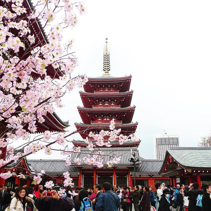 A five-storied pagoda stands regally within the sprawling grounds of Tokyo's oldest, and possibly busiest, temple - Sensō-Ji.  ⠀  #KeepCalmAndJasTravel #japan #asakusa #sensoji #asakusatemple #tokyotouristinfo #visitjpn #visitjapan #japan_visit #TLAsia @tokyo @japan @exploringjapan @explorejpn  ⠀