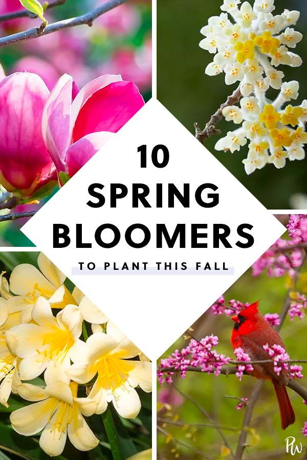 The 10 Best Early Spring Bloomers To Plant This Fall Spring