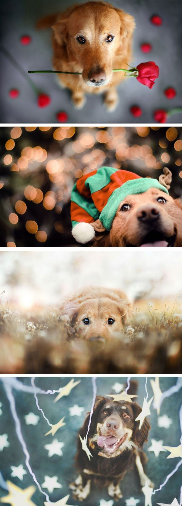 Photographer Captures Beautiful Portraits of Her Pet Dogs #photography #pets