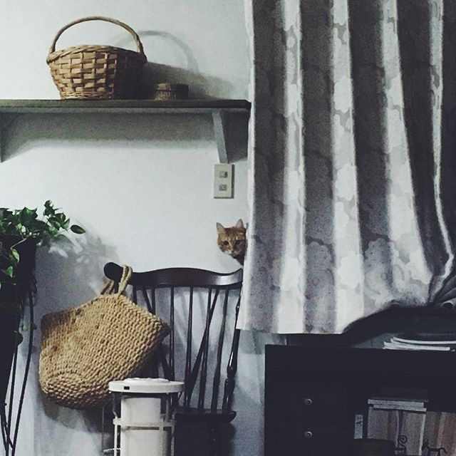 今夜はまだ起きてる    #猫#ねこ#ネコ#ねこのいる暮らし #猫との暮らし #cat #cats #catstagram #ちゃとら #茶とら #古道具#くらし#日常