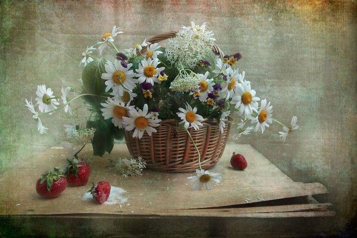 фотографии цветов -14-11