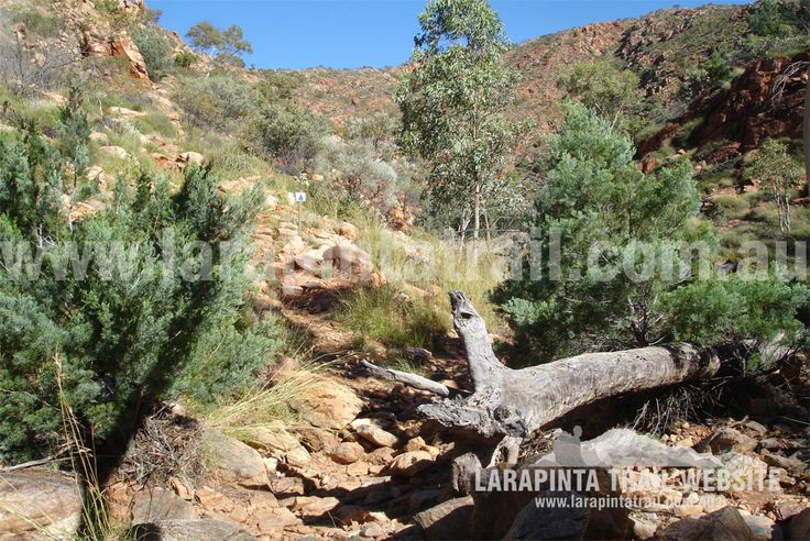 Track Cam: Typical dry creek  bed going along the low route. © Explorers Australia Pty Ltd 2013